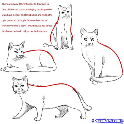 draw  warrior cat draw  realistic cat draw