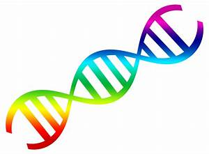 DNA Vector PNG Transparent Image - PngPix