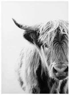 toile vache highland    cm noir blanc ethnique chic