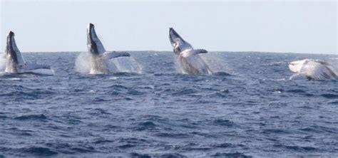 repositioning trips  juliet juliet sailing  diving