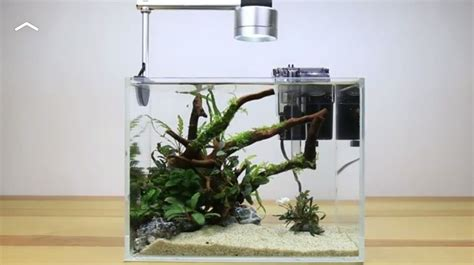 Simple Aquascaping Ideas by Buce Plants Demo Of A Simple Aquascape Beginner