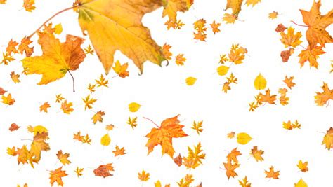 Autumn Tree Leaf Fall Animated Wallpaper - orange autumn leaves fall to the ground soft and subtle