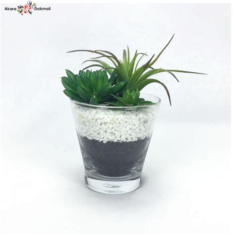 กุหลาบหิน succulent plant