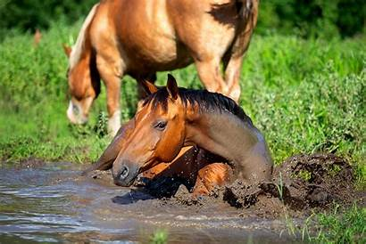 Muddy Horse March April Amidst Madness Showers
