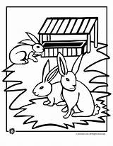 Coloring Cage Rabbit Rabbits Template sketch template
