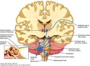 about Meniere's Disease, Vertigo, Dizziness on Pinterest - Vertigo ...  Agoraphobia Dizziness / Balance / Vestibular Disorders