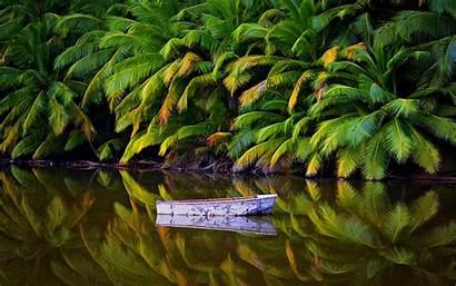 Tropical Australia Nature Palm Island Landscape Trees