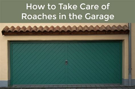cockroaches in garage roaches in the garage here s how to take care of them