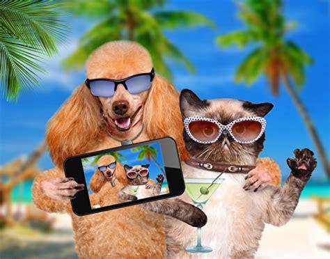 fonds decran chien chat domestique lunettes smartphone