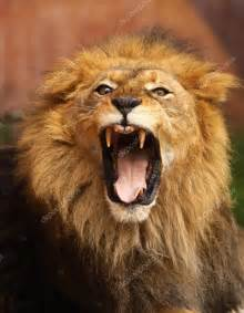 Roaring Lion with Mouth Open