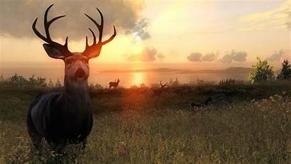 Thehunter Pc Mmogames Steam Conclusion