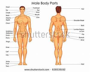 body chart - Cablestream.co