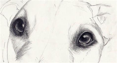 draw dog eyes   amazingly realistic draw