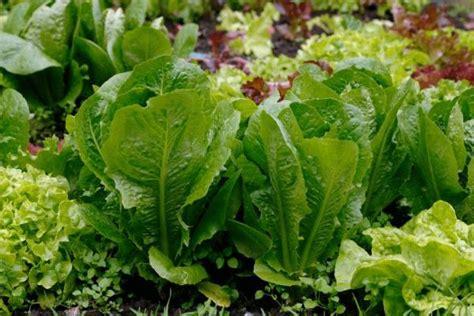 10 Tips On Growing Vegetable Plants  Gardening Tips