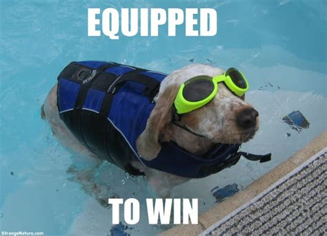 Swimming Pool Funny Quotes Quotesgram