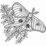Moth Luna Coloring Line Turley Joyce Mihran Illustrator Drawings 288px 71kb sketch template