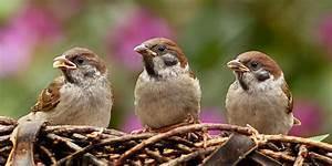Kleine Vögel Im Garten : wie wird mein garten vogelfreundlich ~ Lizthompson.info Haus und Dekorationen