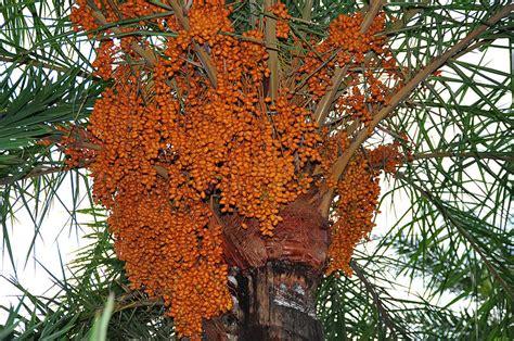 amazing date trees funny tweek