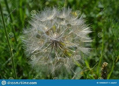 Steppe Flower Round Wind