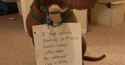dog shaming explosive diarrhea dog shaming pinterest