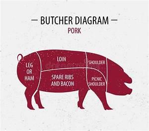 Pig Butcher Chart Stock Illustrations  U2013 345 Pig Butcher