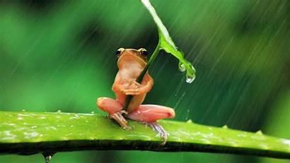 4k Rain Animals Frog Leaf Sitting Aloevera