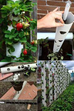 Erdbeeren Pflanzen In Diy Containers So Gehts by Die 32 Besten Bilder Garten In 2019 Diy Garten