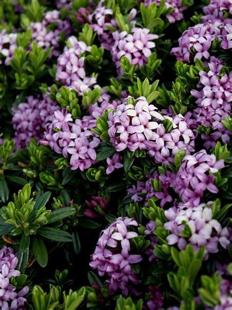 best 25 purple garden ideas on purple