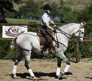 Dr. Hilary Clayton and Dressage Today's Patricia Lasko ...