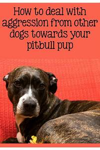 pitbull puppy training tips addressing aggression With aggressive dog training tips
