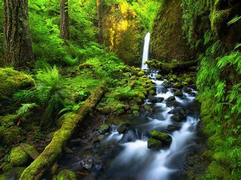 Beautiful Costa Rica Falls River Jungle Lush Green ...