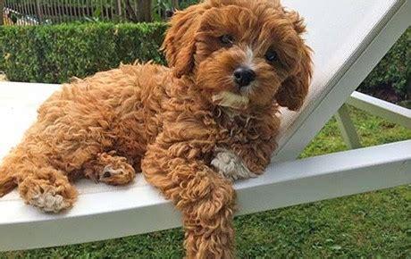 whats  favorite dog breed  lobby onehallyu
