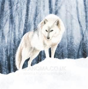 Arctic Wolf Illustrations