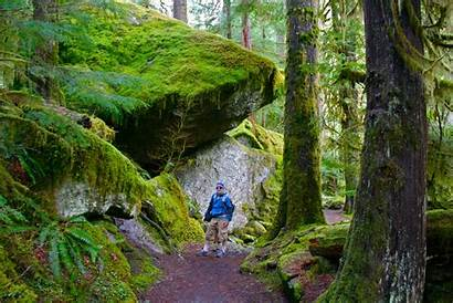 Staircase Olympic National Park Peninsula Trail Hikes