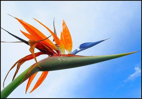 entre ciel et terre l oiseau de paradis 183 la vie d ici et