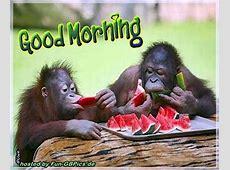 Guten Morgen Gruß Profilbild Facebook BilderGB Bilder