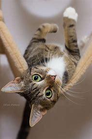 Upside Down Cat Images