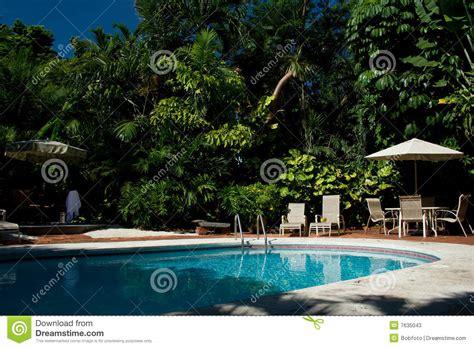 backyard pool  palm trees stock image image
