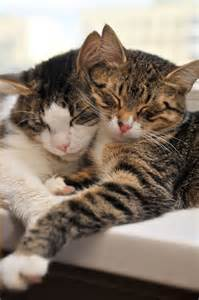 feline cat 10 things every cat owner should about feline