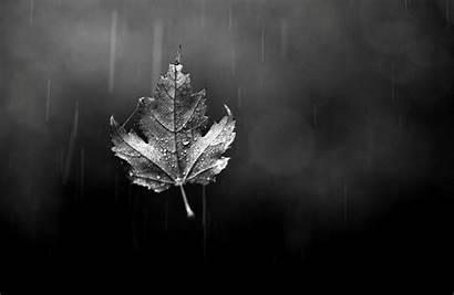Leaf Rain Autumn Maple Classical Sheet Wallpapers