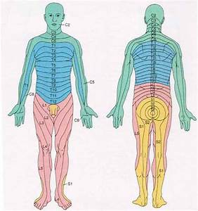 Nerve Pain: Cervical Nerve Pain Pathways