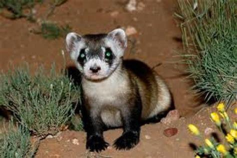 lista animales en peligro de extincion