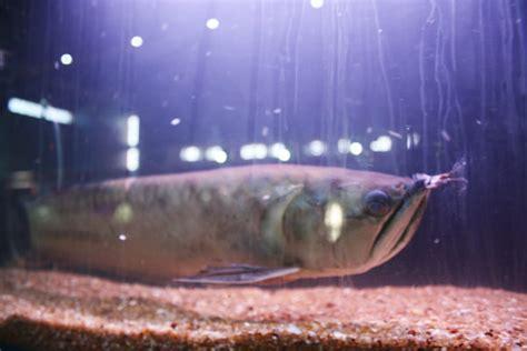 taraporewala aquarium mumbai a whole places to visit in maharashtra taraporewala aquarium mumbai maharashtra india www