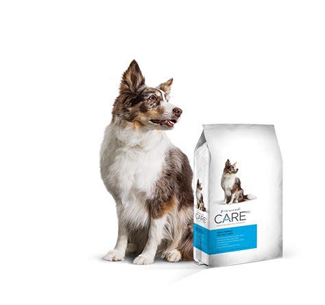 prescription renal dog food diamond care rx