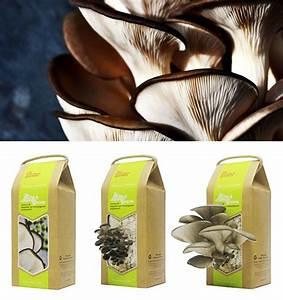Boite à Café : un kit de culture pour faire pousser des champignons mag ~ Teatrodelosmanantiales.com Idées de Décoration