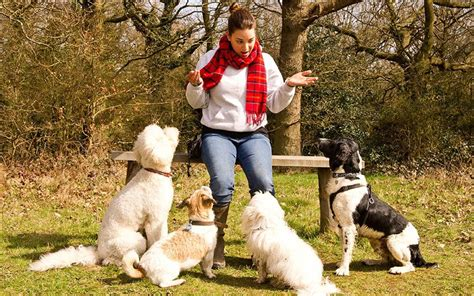 dog dogs walking want walkers washing hands telegraph april earn probably job could fool pet