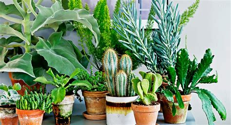 trees you can plant to house where to buy the best indoor plants on the sunshine coast sunshine coast the urban list