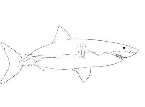 draw  shark draw central