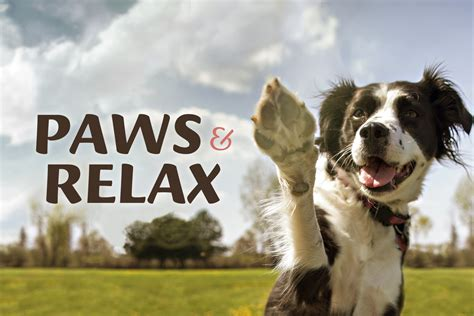 EBSCO Industries Hosts a Day to 'Paws and Relax' - EBSCO ...