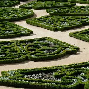 Plantes Et Jardin : buis commun plantes et jardins ~ Melissatoandfro.com Idées de Décoration
